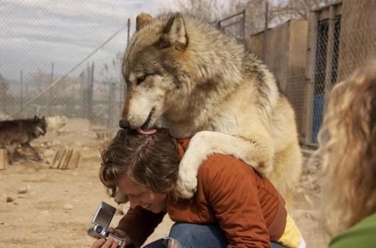 Как снимали сумерки волков актер в брате 2 лысый