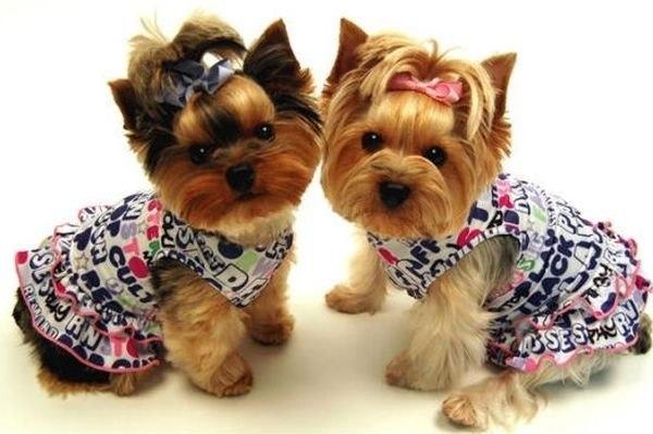 одежды для животных,
